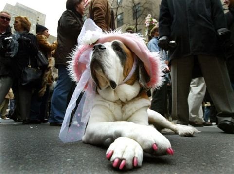 cute-dog3.jpg